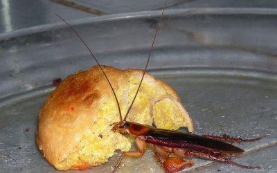 Roach Recourse?