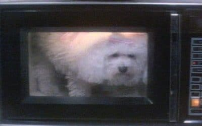 Poodle In The Microwave: Three Common Tenant Misconceptions